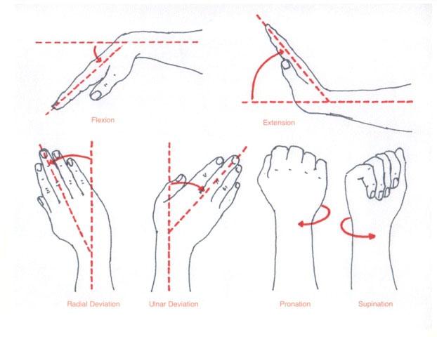 Forearmor Advantage Wrist Hand And Forearm Strengthener
